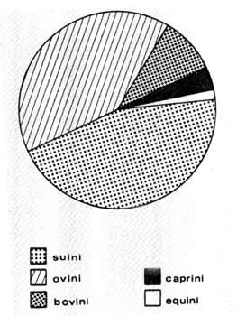 Statistica degli animali allevati nei possedimenti del Monastero di Santa Giulia di Brescia: nel IX sec. d. C.