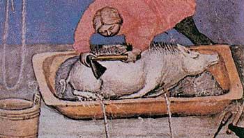 Andrea de' Bartoli, Pelatura del porco. Miniatura, XIII sec., Forlì, Biblioteca Comunale