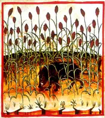 Cinghiale al pascolo in un campo di melica da un'illustrazione del Theatrum Sanitatis di Ububchasym de Baldach: codice della fine del XIV secolo, Roma, Biblioteca Casanatense, cod. 4182