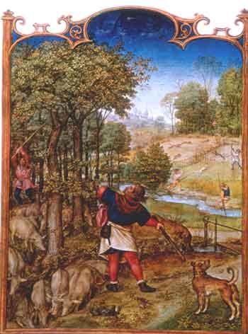 Breviario Grimani, Il mese di Novembre con la battitura delle querce e i maiali che si cibano delle ghiande: miniatura, XV-XVI sec. Venezia, Biblioteca Marciana.