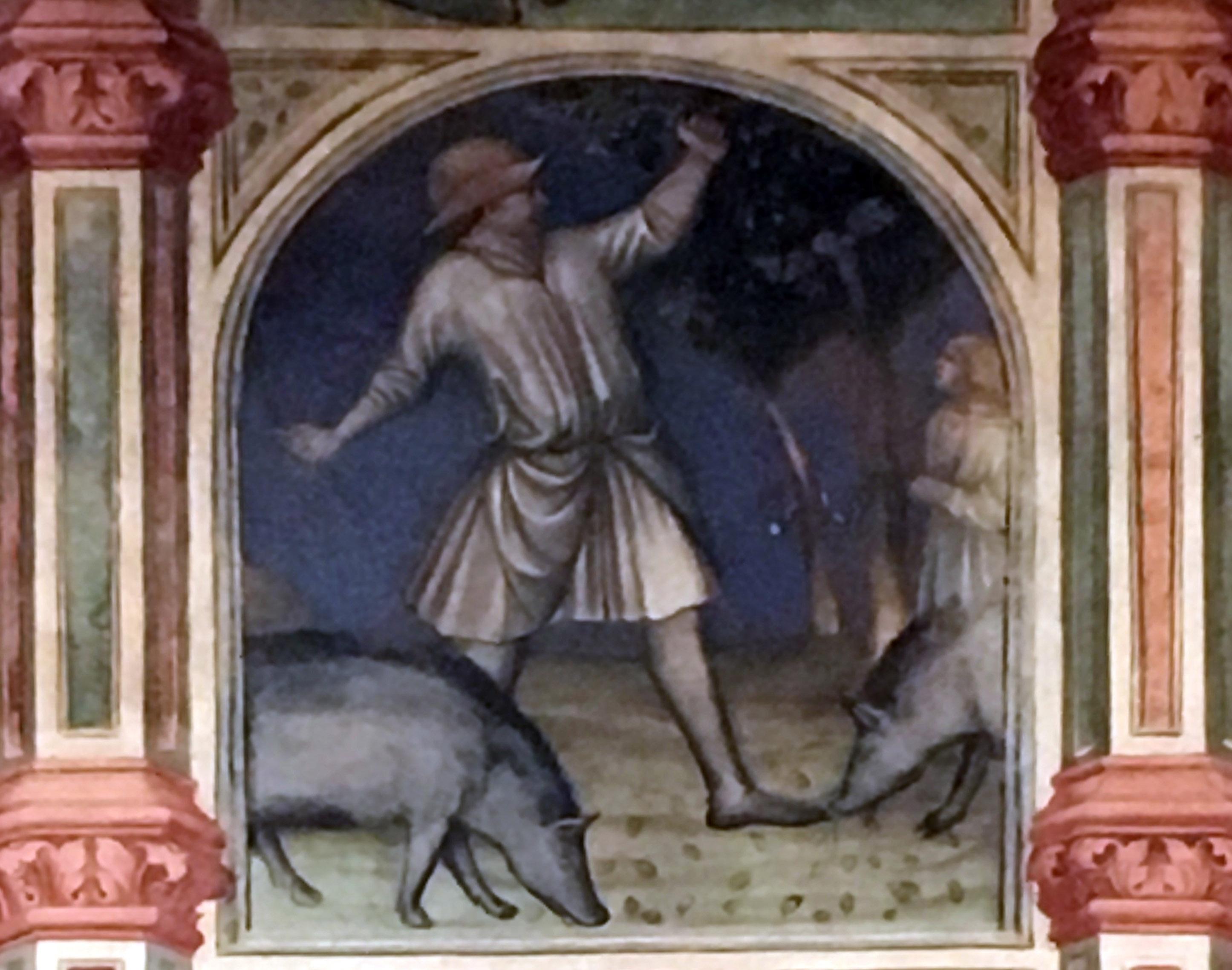 Padova Palazzo Ragione Maiale Ghiande